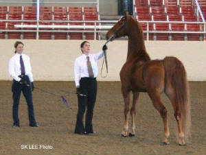 Lisa, Hilarie and Dante in the Halter Class